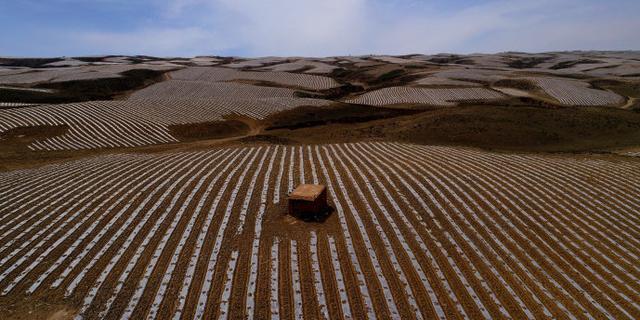 壮观!硒砂瓜绘就的大地画卷