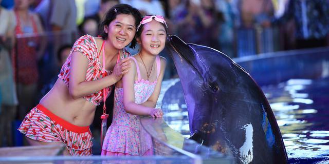 与海豚宝宝来个亲密接触
