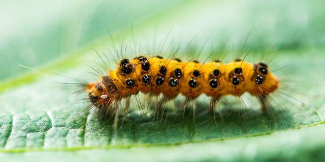 实拍微距镜头下的昆虫