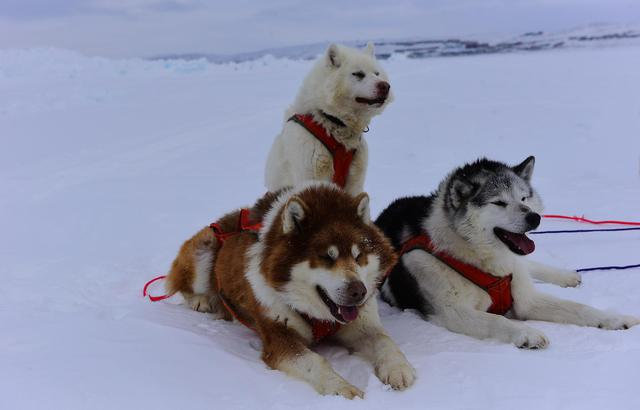 3万多公里,解密人迹罕至的北极地区