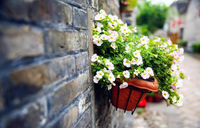 踏花而行的甘南,总有一朵花为我绽放