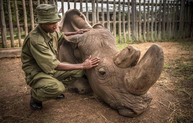 """北白犀""""苏丹""""家园的一次深度保护行动"""