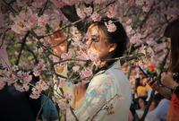 与樱花相约最美春天