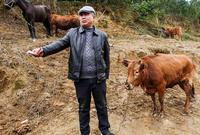 貴州河灘上的傳統牛市場