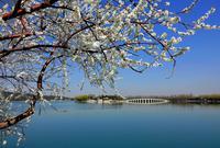 颐和园又到春暖花开时