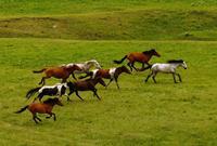 草原又到旅游季