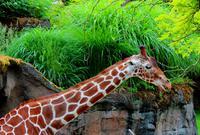 #一城一夏#长颈鹿的节日