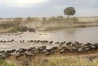 东非大迁徙,神的年度大戏