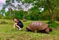 巨型象龟有多大