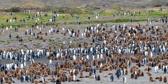 索尔兹伯里:王企鹅的天堂