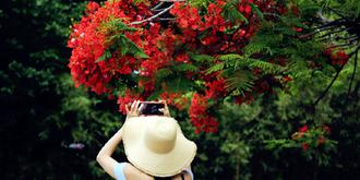 凤凰花开红透半边天
