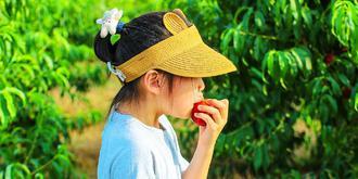 诱人油桃边摘边吃