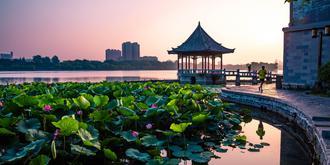 济南大明湖的荷花开了