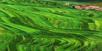夏季的桦皮岭有多美