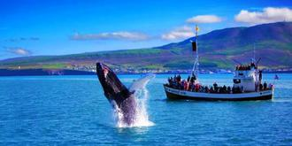 7月在冰岛追鲸