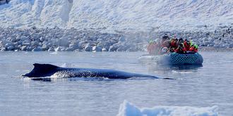 南极观鲸记