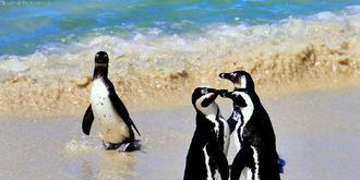 不去南极也可以看到企鹅