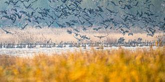 沈陽臥龍湖壯觀候鳥群