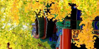 葉落真覺寺