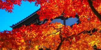 秋天的京都光明寺