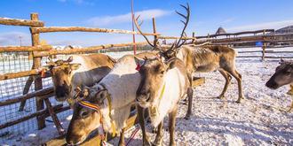 中国原始的使鹿部落