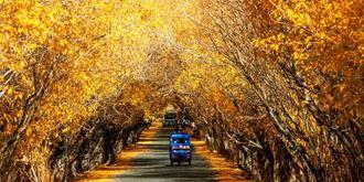 深秋的帕米爾高原