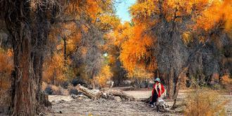 沙漠公路旁壮阔的胡杨林