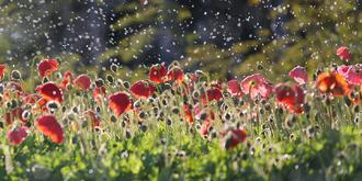 当鲜花盛开在冬天