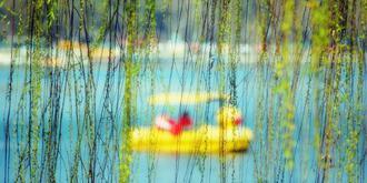 春风又绿江南岸