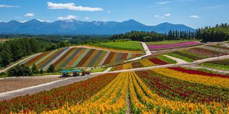 北海道的花田好美