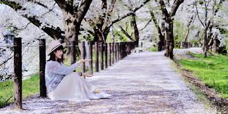 日系浪漫樱花雨