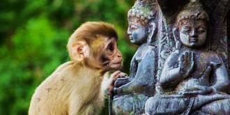 加德满都神奇的猴庙