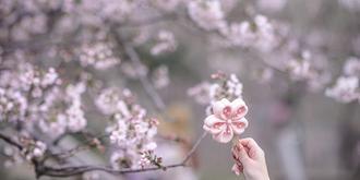 玉渊潭唯美樱花