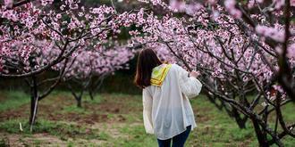 桃红又见一年春
