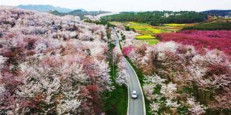 开满鲜花的村庄