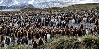 壮观的企鹅大军