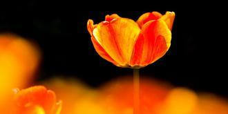 中山公园绝美郁金香