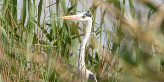沙湖迎来最佳观鸟季