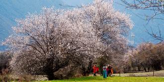 中国最长的桃花沟