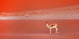 充满生机的纳米比亚红沙漠