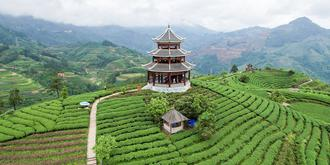 廣西最美的茶園