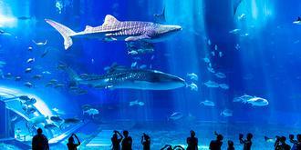 号称世界第一的水族馆