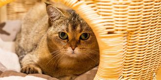 這里是愛貓人士的天堂