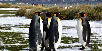 喜欢聊天的企鹅