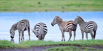 实拍非洲特产斑马