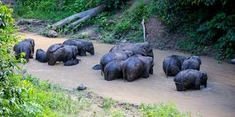 西双版纳保护区里的野象