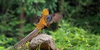 这些鸟你认识吗