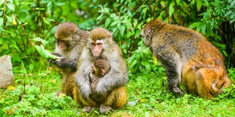 中国海拔最高的猕猴保护区
