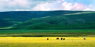 刚察草原绝美风光