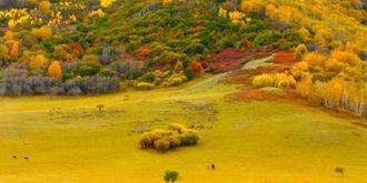 九月的坝上秋色如画